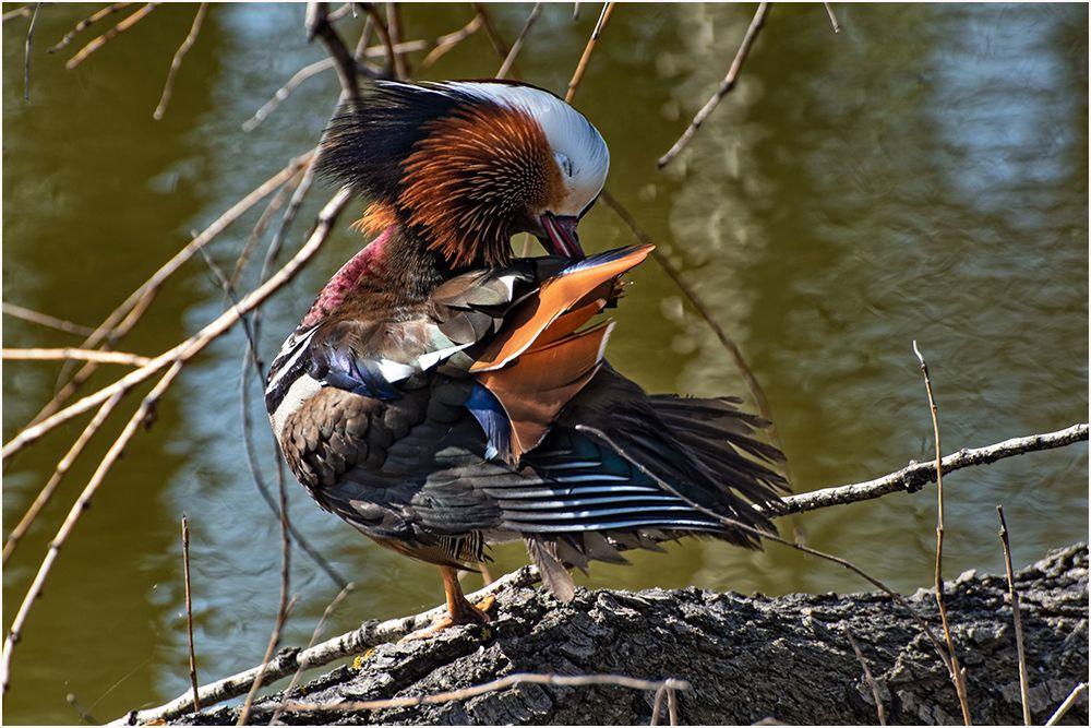 Из жизни птиц, часть 18