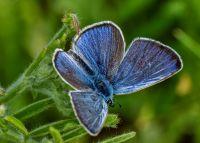 Бабочкина поляна