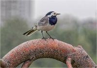 Из жизни птиц. Часть 13