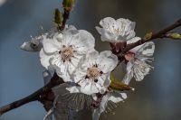 Макро-2017. Весеннее цветение