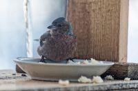 Из жизни птиц, часть 11