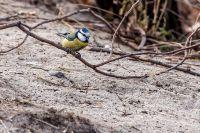 Из жизни птиц, часть 5