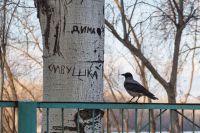 Из жизни птиц, часть 3
