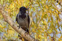 Из жизни птиц, часть 2